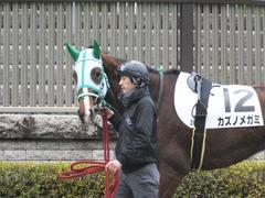 20160130 東京3R 3歳未勝利 カズノメガミ 13