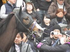 20190323 中山9R ミモザ賞 3歳牝馬(500) トロハ 10