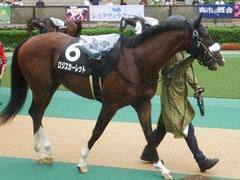 20190622 東京10R 八ヶ岳特別(2勝) ロジスカーレット 12