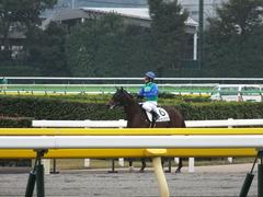 20141108 東京4R トーセンカナロア 14