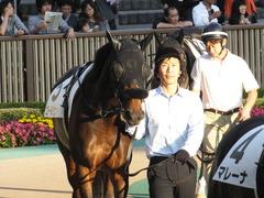 20141025 東京12R ゴールウェイ 05