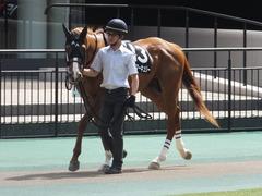 20150530 東京10R 薫風S ランドマーキュリー 02