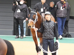 20150321 中山10R 韓国馬事会杯 ショウナンアポロン  18