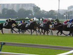 20141026 東京4R ラッシュアタック 15