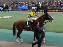 20151129 東京10R ウェルカムS アッシュゴールド 11