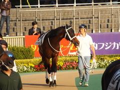 20141018 東京12R ショウナンアポロン 03