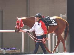 20170225 阪神9R 丹波特別(500) レーヌドブリエ 03