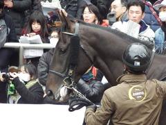 20171224 中山5R 2歳メイクデビュー ダノンシャレード 11