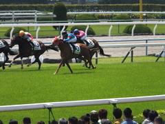20150425 京都4R 3歳未勝利 レーヌドブリエ 16
