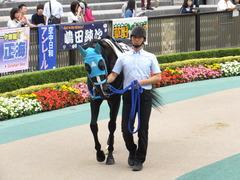 20151010 東京4R 3歳上障害未勝利 サウンドアラムシャ 04