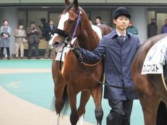 20161119 東京2R 2歳未勝利 プンメリン 02