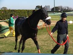 20131221 中山競馬場 ショウナンラグーン 16
