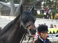 20181124 東京11R キャピタルS(OP) プロディガルサン 07