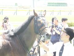 20140531 東京6R オウケンブラック 21
