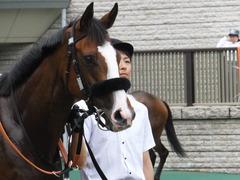 20170625 東京1R 3歳牝馬未勝利 プンメリン 12
