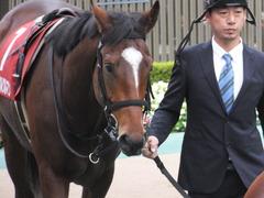 20141108 東京11R 京王杯2歳S マイネルグルマン 06