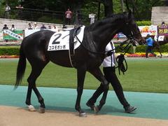 20150523 東京3R 3歳未勝利 コスモポッポ 07