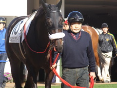 20131221 中山競馬場 ショウナンラグーン 04