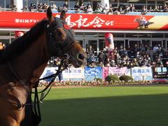 20161224 中山10R クリスマスカップ(1000) オウケンブラック 13