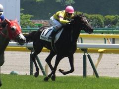 20170520 東京4R 3歳未勝利 ファインパープル 18