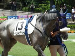 20180609 東京6R 3歳牝馬未勝利 ウェディングベール 04