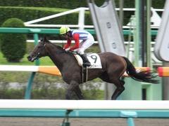 20150927 中山3R 3歳未勝利 タニオブキャップ 13