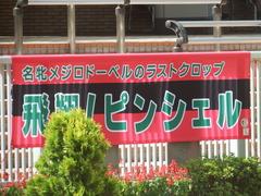 20190810 新潟7R 3歳上1勝クラス ピンシェル 01