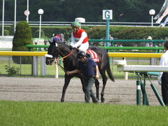 20140503 東京11R 青葉賞 ショウナンラグーン 12