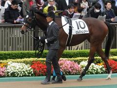 20161030 東京4R 2歳メイクデビュー ビルズトレジャー 09