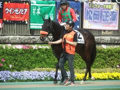 20190421 東京8R (500) ラプターゲイル 13