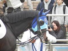 20190323 中山7R (500) アドマイヤムテキ 14