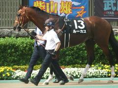 20190608 東京11R 多摩川S 3勝 ルーカス 12