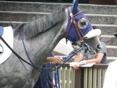 20180609 東京6R 3歳牝馬未勝利 ウェディングベール 11