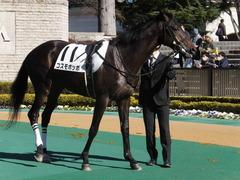 20150131 東京2R 3歳未勝利 コスモポッポ 09