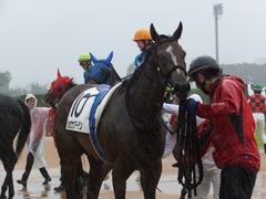 20170917 中山5R 2歳牝馬メイクデビュー ショウナンアーデン 17