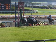 20131221 中山競馬場 ショウナンラグーン 14