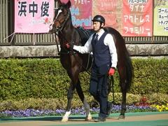 20190216 東京9R フリージア賞 3歳500万下 ホウオウサーベル 04