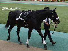 20161010 東京10R オクトーバーS(1600) ショウナンラグーン 08