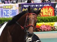 20160612 東京8R 3歳上500万下 トーセンカナロア 06
