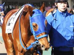 20170219 東京1R 3歳未勝利 ハッピーサンディー 04