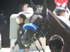 20180421 東京6R 3歳未勝利 ミッキーバード 11
