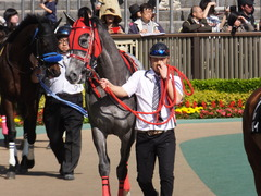 20170430 東京11R スイートピーS 3歳牝馬OP ミザイ 07