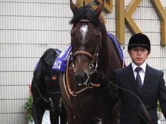 20151122 京都11R MCS(G1) モーリス 08