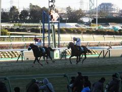 20140119 中山競馬場 ショウナンラグーン 16