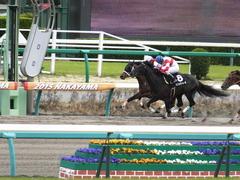 20150321 中山10R 韓国馬事会杯 ショウナンアポロン  16