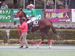 20190126 東京10R クロッカスS 3歳OP オトナノジジョウ 17