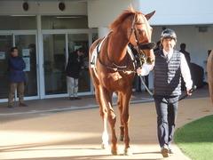 20181228 中山2R 2歳牝馬未勝利 パーフェクトワン 06