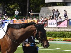 20141011 東京8R ヴィルトグラーフ 04