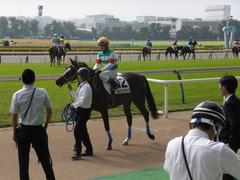 20141026 東京4R ラッシュアタック 14