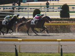 20150221 東京1R 3歳未勝利 フレンドマキシマム 10